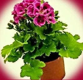 А вот и мои цветочки и ещё прошу помощи